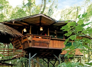 TREE HOUSE LODGE - Punta Uva