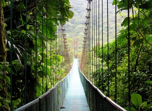 MONTEVERDE CLOUD FOREST MINI TOUR